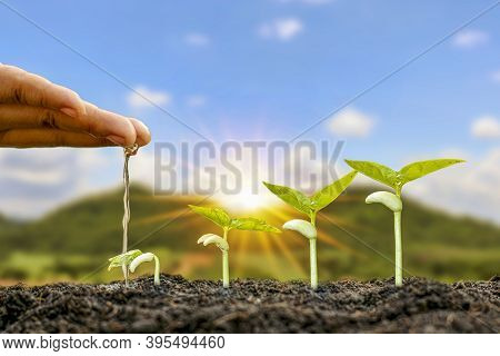 Planting Plants On Fertile Soil And Watering The Plants Including Displaying The Growth Stages Of Pl