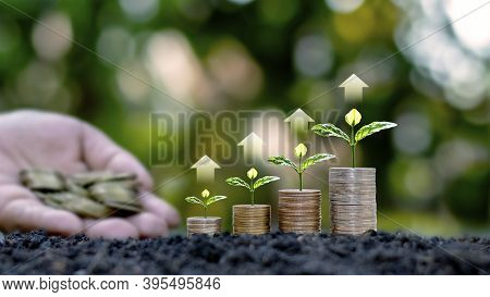 Small Green Trees Growing On Coin Piles Including Rising Arrows, Ideas For Saving Money And Growing
