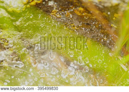 Abstract Blurry Background With Bokeh. Green Background With Copy Space. Blurred Cobwebs In The Dew.