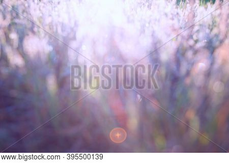 Abstract Bokeh Light Background Texture, Grunge.blurry Natural Background. Blurred Image Of Meadow G