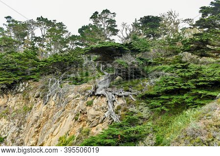 Point Lobos State Natural Reserve Just South Of Carmel-by-the-sea, California, United States, And At