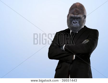 Serious Gorilla In Suit On Blue Background