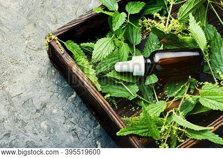Healing Tincture Of Nettle.
