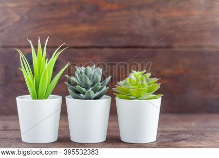 Indoor Artificial Plants, Various Succulents In Pots. Succulents In White Mini-pots. Ideas For Home