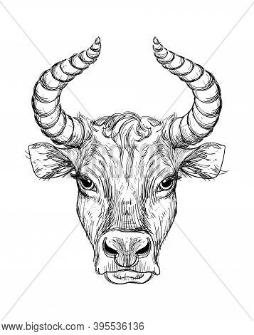 Happy New Year 2021 Of The Ox, Ox-taurus. Linear Drawing On A Black Background, Tarot, Tattoo, Chine
