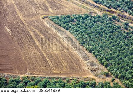 Aerial View Of Arable Field And Olive Plantation