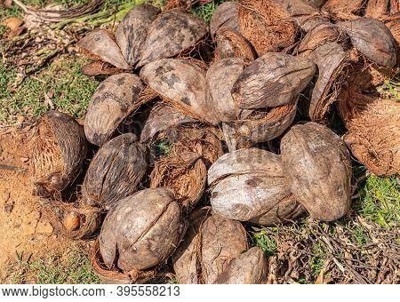 Kadenahalli, Karnataka, India - November 3, 2013: Closeup Of Heap Of Discarded Brown-gray Coconut Hu