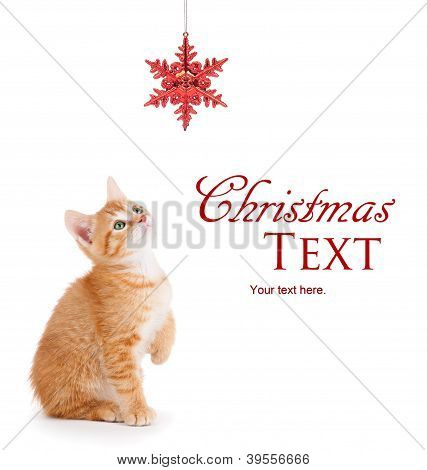 Cute Orange Kitten Playing with a Christmas Ornament on White