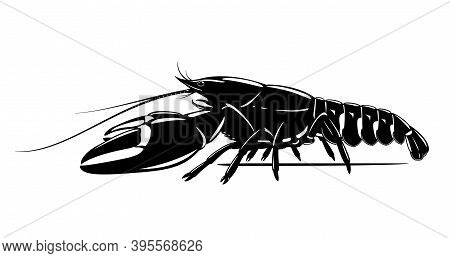 Realistic Signal Crayfish Black And White Isolated Illustration, One Big Freshwater North American C