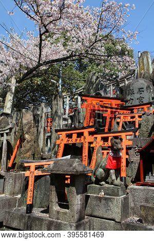 Kyoto, Japan - April 18, 2012: Spring Time Cherry Blossoms In Sacred Place Fushimi-inari Taisha Shri