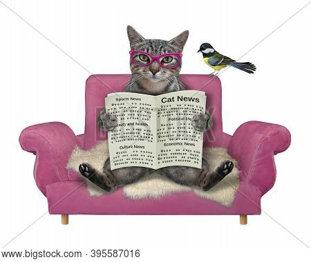 A Gray Cat In Glasses With A Newspaper Sits On A Pink Sofa. White Background. Isolated.