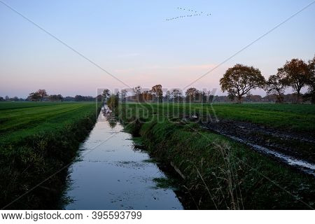Dutch Frisian Polder Landscape Scene With Green Pasture Meadows, Ditch, Canal And Migratory Birds In