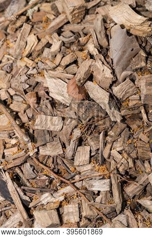 Fuel And Renewable Energy Wood Chips - Sustainability