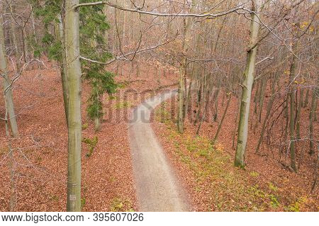 Żary, A Green Forest In Late Autumn.\nzielony Las, A Forest Complex Located Near The City Of Żary In