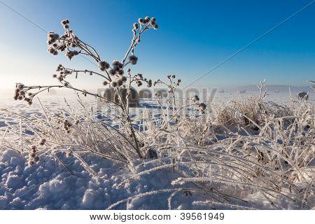 Snowy Hay Bales