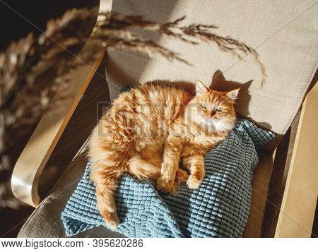 Top View On Cute Ginger Cat Lying On Pillow. Fluffy Pet Is Staring On Dried Grass Used As Toy. Cozy