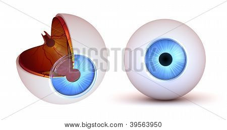 Eye anatomy - inner structure and front view, isolated 3d image poster