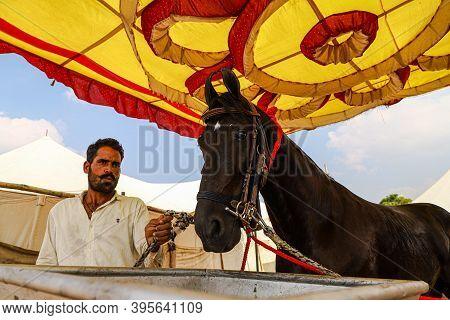 November 2020 Pushkar,rajasthan,india. A Portrait Of A Man With Its Horse At Pushkar Camel Festival.