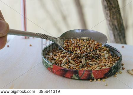 Adding Grain To The Bird Feeder For Wintering Birds. Real Life. Close-up.