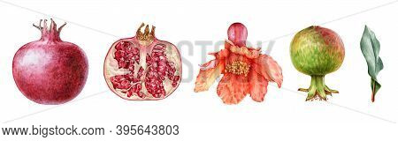 Pomegranate Fruit And Flower Watercolor Set. Hand Drawn Realistic Tasty Garnet Red Fruit. Pomegranat