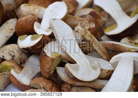 Close Up Brown Porcini Edible Mushrooms (boletus Edulis, Known As Penny Bun Or Cep) At Retail Displa