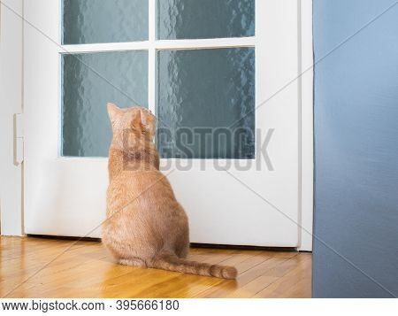 Cat Kitten Waiting At The Door For  Owner For A Walk Or Having E Meal To Eat