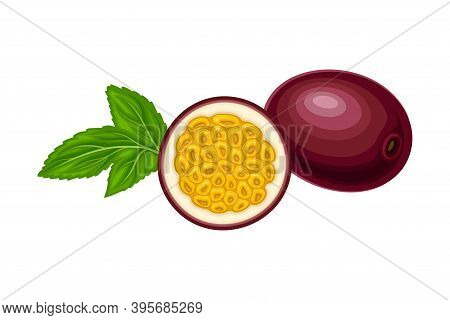 Halved Purple Passion Fruit With Thick Pith And Numerous Seeds Rested With Green Leaf Vector Illustr
