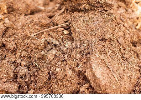 Close-up Of Manure. Natural Organic Fertilizer. Full Frame