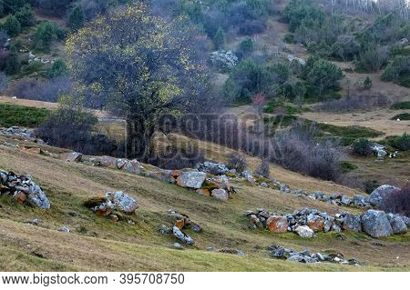 Dry Autumn Tree In Old Abandoned Balkar Village In North Caucasus