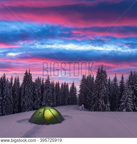 Green tent lighted from the inside by a flashlight against the backdrop of pine tree forest and glowind pink sky. Amazing snowy landscape. Tourists camp in winter mountains. Travel concept