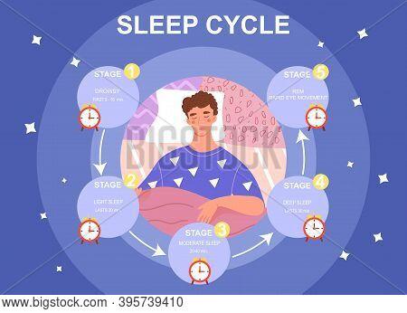 Sleep Cycle Infographics. Stage Of Sleep During The Night. Phase Of Deep And Moderate Sleep, Drowsy