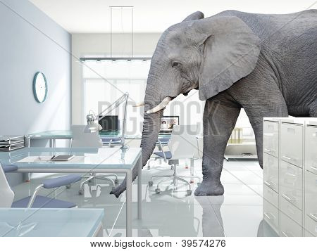 huge elephant walk in modern office