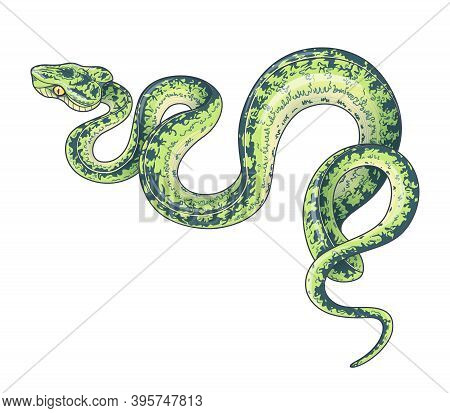 Hand Drawn Creeping Garden Tree Boa Isolated On White Background. Vector Green Winding Spotted Snake
