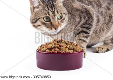 Studio Lighting. The Animal Feed Is Poured Into A Bowl. The Cat Is Eating Food. Close-up.