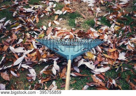 A Close-up Image Of  Rake  On A Pile Of Leaves