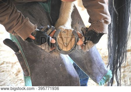 Male Farrier Working On Horse Shoes Inside A Stable.
