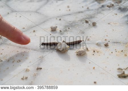 Closeup Of A Centipede Targeting A Human's Finger On A Natural Alabaster Surface