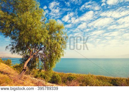 Landscape With Alone Tree On The Shore And Blue Sky With Clouds. Beautiful Nature Of Israel. Galilee