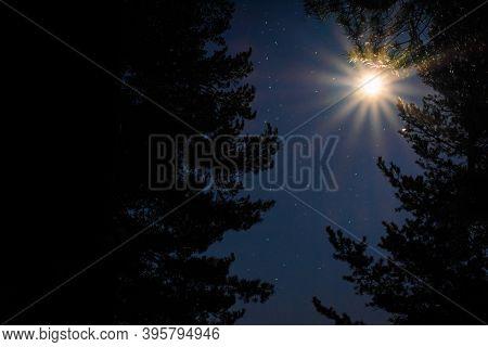 Moonlight Passing Between Relict Trees In The Starry Sky