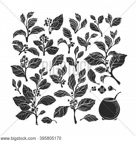 Mate Plant Set, Calabash. Vector Floral Silhouette Of Leaves, Branch, Flower, Berry. Art Collection