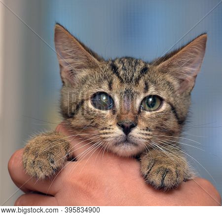 Cute Tabby Kitten With A Sick Eye At An Animal Shelter, Glaucoma, Cataract