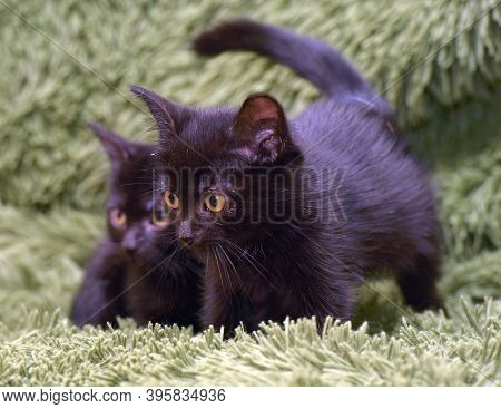 Wo Cute Little Black Kittens Together On A Green Background