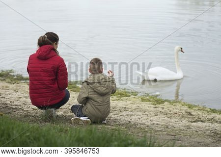 The Mother And Son Are Feeding White Swan On The Lake Outdoors In Nature.
