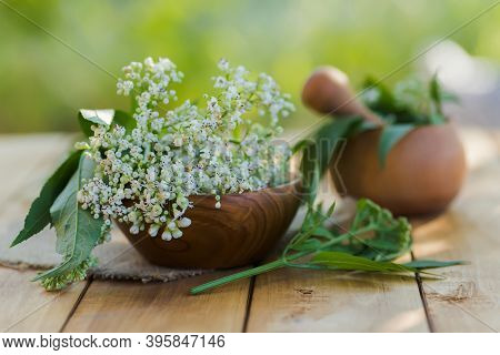 Buquet Valerian On Wooden Plate. Collecting Medicinal Herbs During Flowering. White Fresh Valerian F