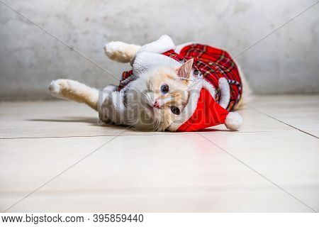 Fluffy Ragdoll Cat With Blue Eyes In Santas Hat And Housecoat Lying On The Floor Tiles
