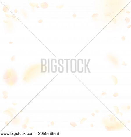 Yellow Orange Flower Petals Falling Down. Superb Romantic Flowers Vignette. Flying Petal On White Sq