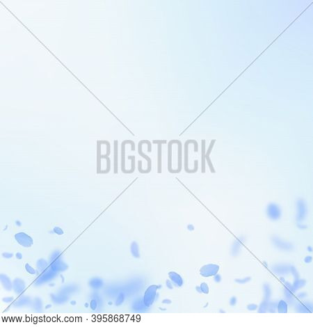 Dark Blue Flower Petals Falling Down. Unequaled Romantic Flowers Gradient. Flying Petal On Blue Sky