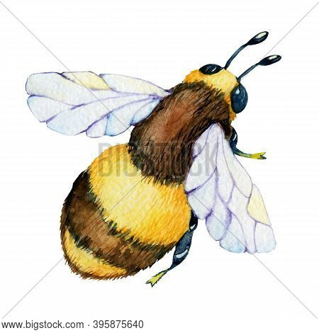 Insect Bee, Wasp Isolated On White Background. Close-up Watercolor Illustration. Packaging And Wrapp
