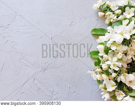 Top View Of A Blossoming Apple Tree Branch On A Textured Gray Background. Product Background And Bas
