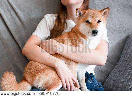 A Woman Hugs A Cute Red Dog Shiba Inu, Sitting On Her Lap At Home. Close-up. Trust, Calm, Care, Frie
